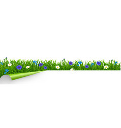 Grass and blue flowers border white background vector