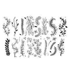 Hand drawn tree wood branches boughs with leaves vector