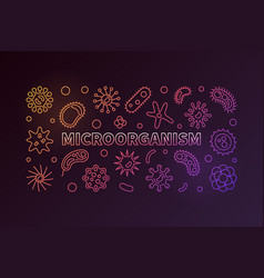 microorganism colorful outline horizontal vector image