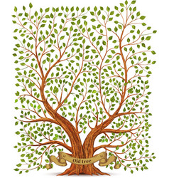 Old vintage tree vector