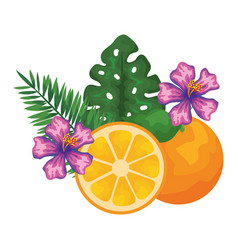 Orange citrus fruit with leafs and flowers vector