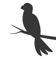 parrot silhouette icon vector image