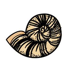 Sea snail icon vector