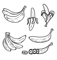 set of the fresh banana icons design elements for vector image