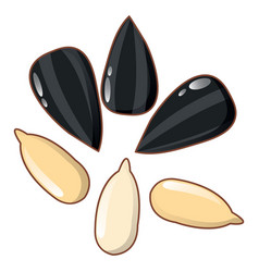 sunflower seeds icon cartoon style vector image