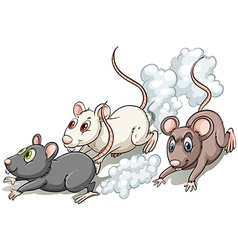 Three rats vector