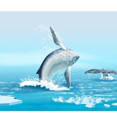whales in the Northern Ocean vector image