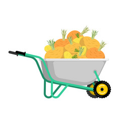 wheelbarrow and turnip vegetables in garden vector image