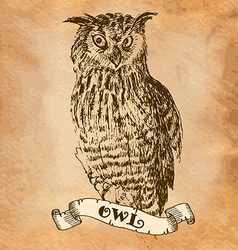 Owl in the style of an engraving vector