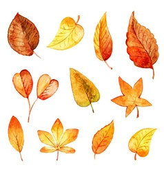 Set autumn leaves watercolor vector image vector image