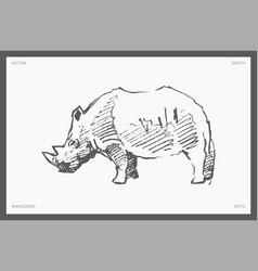 Detail drawn rhinoceros realistic vector