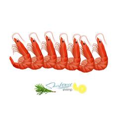 Fresh prawns shrimp in vector