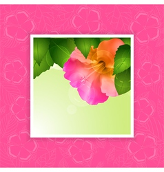 Hibiscus flower border on pink vector