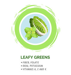 Leafy green vegetables useful products when vector