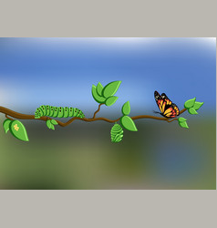 Life cycle of butterfly with eggs caterpillar vector
