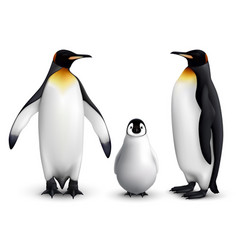 Penguin realistic set vector