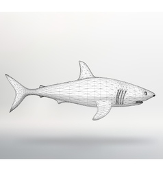 Shark The structural grid of vector