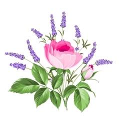 Single rose card vector