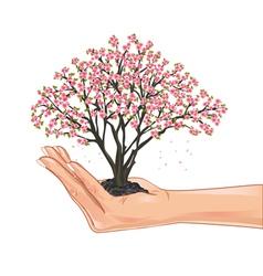 Hand holding a cherry tree blossom vector