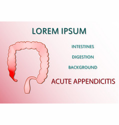 Acute appendicitis vector