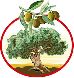 Circular frame shows an old olive tree vector