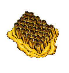 Honeycomb drawing hand drawn honey vector