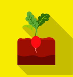 Radish icon flat single plant icon from the big vector