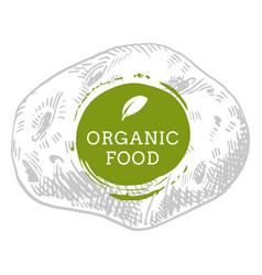 Label potato fresh natural eco food hand drawn vector