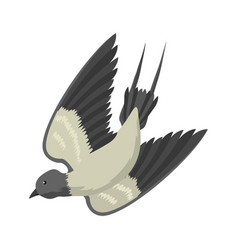 swallow isolated bird vector image