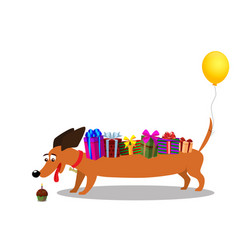cute dachshund with gifts on back and baloon on vector image