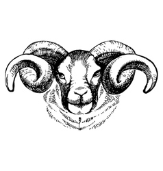 Hand drawn sketch portrait of sheep vector