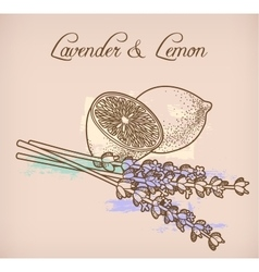 Lemon and lavender flowers vector