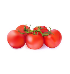 set red tomatoes on a white background vector image