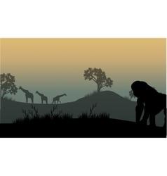 Silhouette of gorilla and giraffe vector