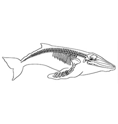 Skeleton of a whale vector