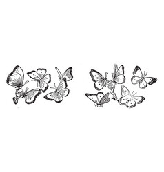 Ten butterflies vintage vector
