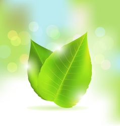 Fresh and green leaf background vector image