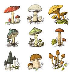 mushroom set hand drawn engraved vintage organic vector image vector image