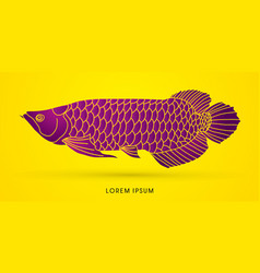 arowana fish graphic vector image
