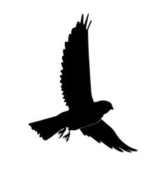 Black silhouette of kestrel vector
