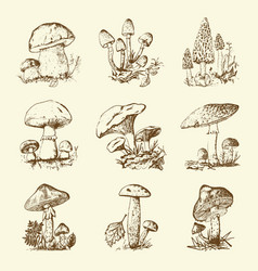 Mushroom set hand drawn engraved vintage organic vector