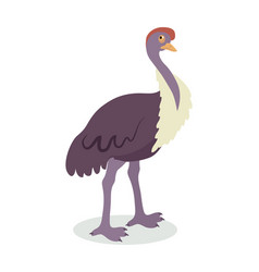 ostrich cartoon flat vector image