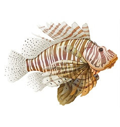 Lionfish vector image