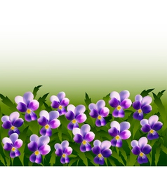 A lot of violet pansy flowers vector image