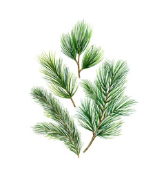 Christmas card with green fir branches vector