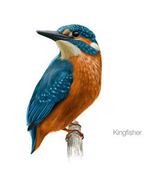 Kingfisher hand drawn vector