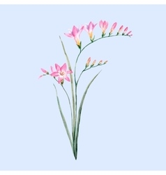 Watercolor pink freesia flower royalty free vector image mightylinksfo