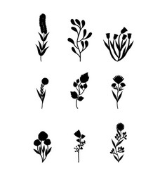 botany and herbs design vector image