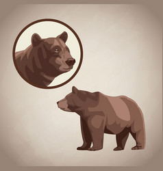 Bear drawing over brown background vector
