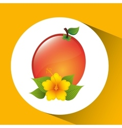 Fruit apricot flower yellow graphic vector